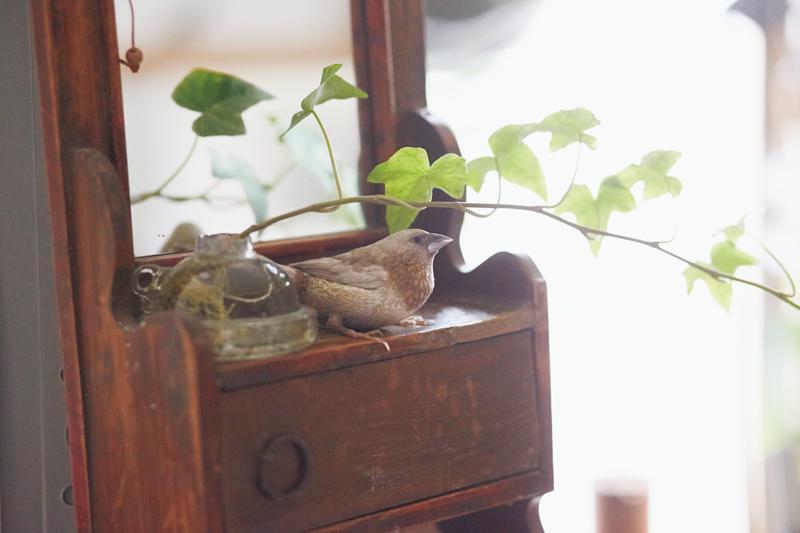 画像: まるで林のように、グリーンがあちこちにあしらわれている飛松家。そのなかを、ジュウシマツのムギが自由に飛びまわる。「緑のなかをムギが飛んでいるのを見ると、こちらがホッとした気分になって癒されます」