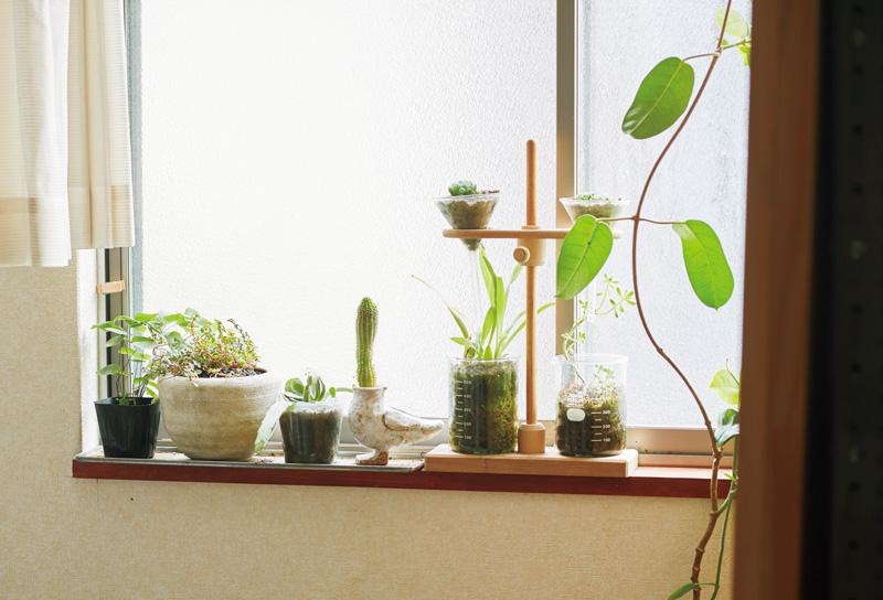 画像: 「花は、散ってしまうとさびしいから、結局、増えていくのはグリーンばかり」と眞弓さん。日当たりがいい家なので多肉植物は放っておいても元気に育つ。それぞれが、伸びるにまかせて育てている