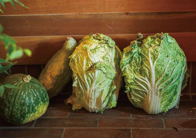 画像: 白菜は縦置きにして、玄関先の寒い場所で長期保存