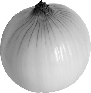 画像: 通年、出まわっている。丸くふっくらとして重量感があり、茶色い皮がよく乾燥してつやがあるもの、首の部分は細く締まりがあり、芽の出ていないものが良品。