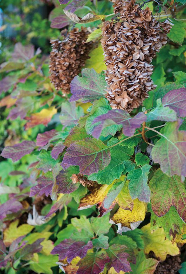 画像3: 「秋の庭」・横山タカ子 信州四季暮らし