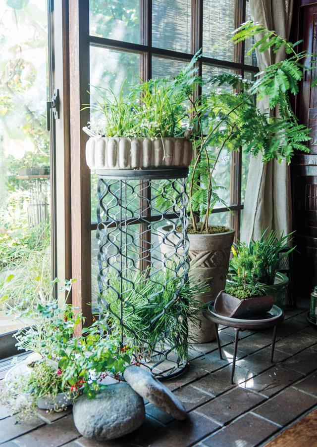画像: 冬が来る前に鉢植えを室内に移して越冬させる