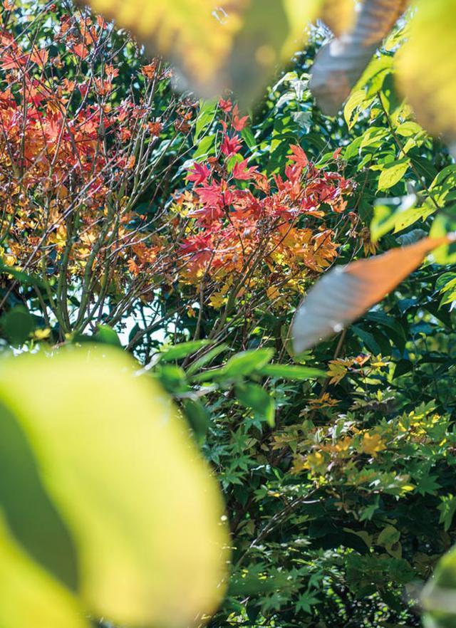 画像: 紅葉が美しい庭