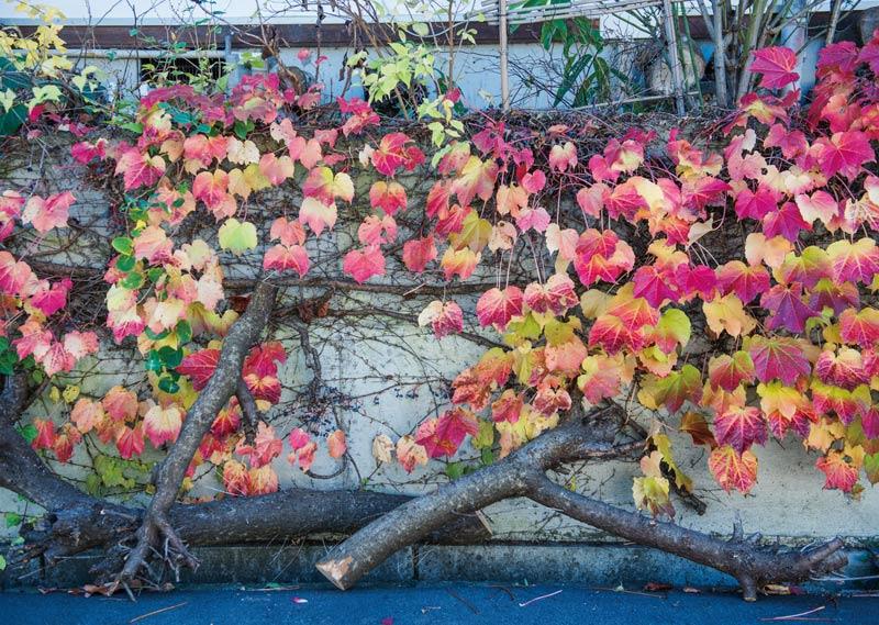 画像1: 秋の庭|横山タカ子 信州四季暮らし