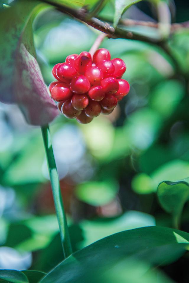 画像2: 「秋の庭」・横山タカ子 信州四季暮らし