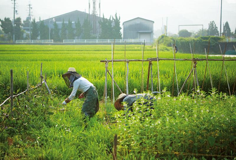 画像: 畑で作業をする川口さんと摩紀さん。野菜の支柱は木の枝などを使い、朽ちたら土に返す。