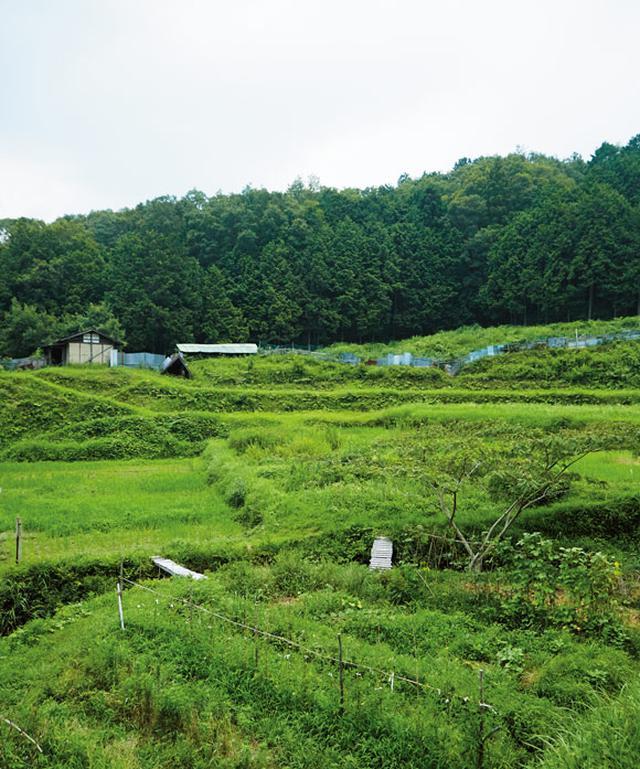 画像: 三重と奈良の県境にある「赤目自然農塾」の棚田。基本的に月1回、土・日曜日に実習が行われている。無償で田畑を借りることができ、いつでも作業に来られる