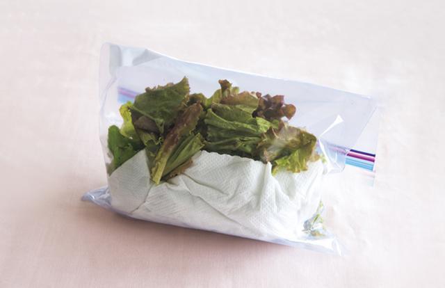 画像: 冷水につけてから水けをきり、キッチンペーパーを敷いて保存袋へ。こうしておけば、3~4日はシャキシャキ状態が続く