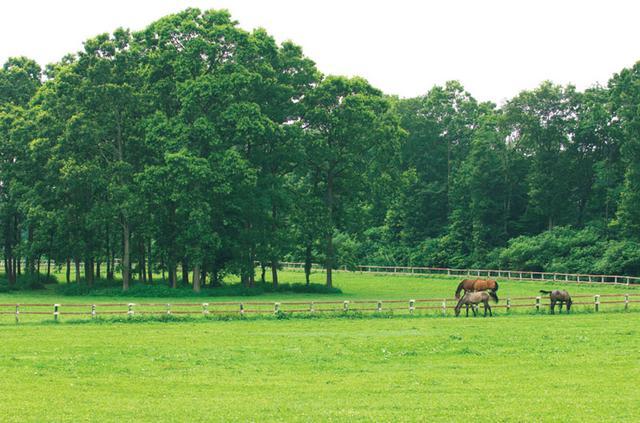 画像: 御料牧場