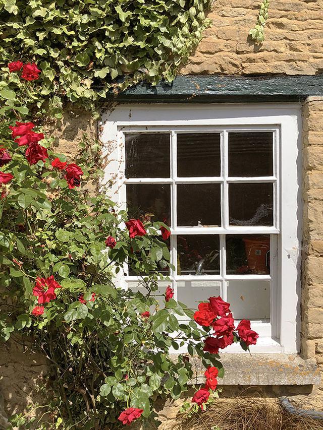 画像: これは自宅のバラです。コッツウォルズのはちみつ色の石壁に、赤いバラが映えています