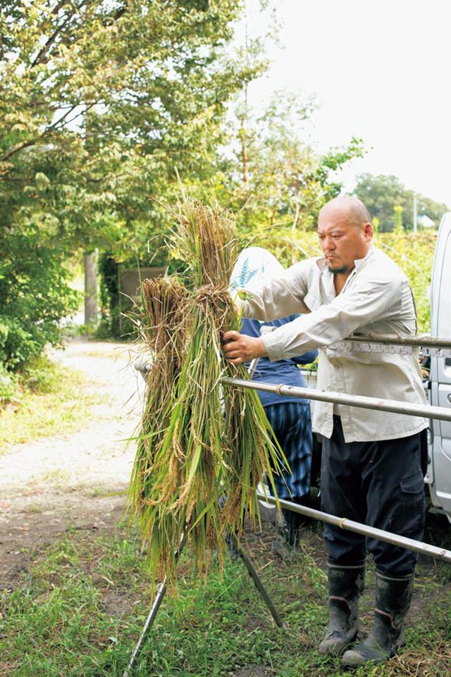 画像: 14:30 稲を天日干し。お米を追熟させます