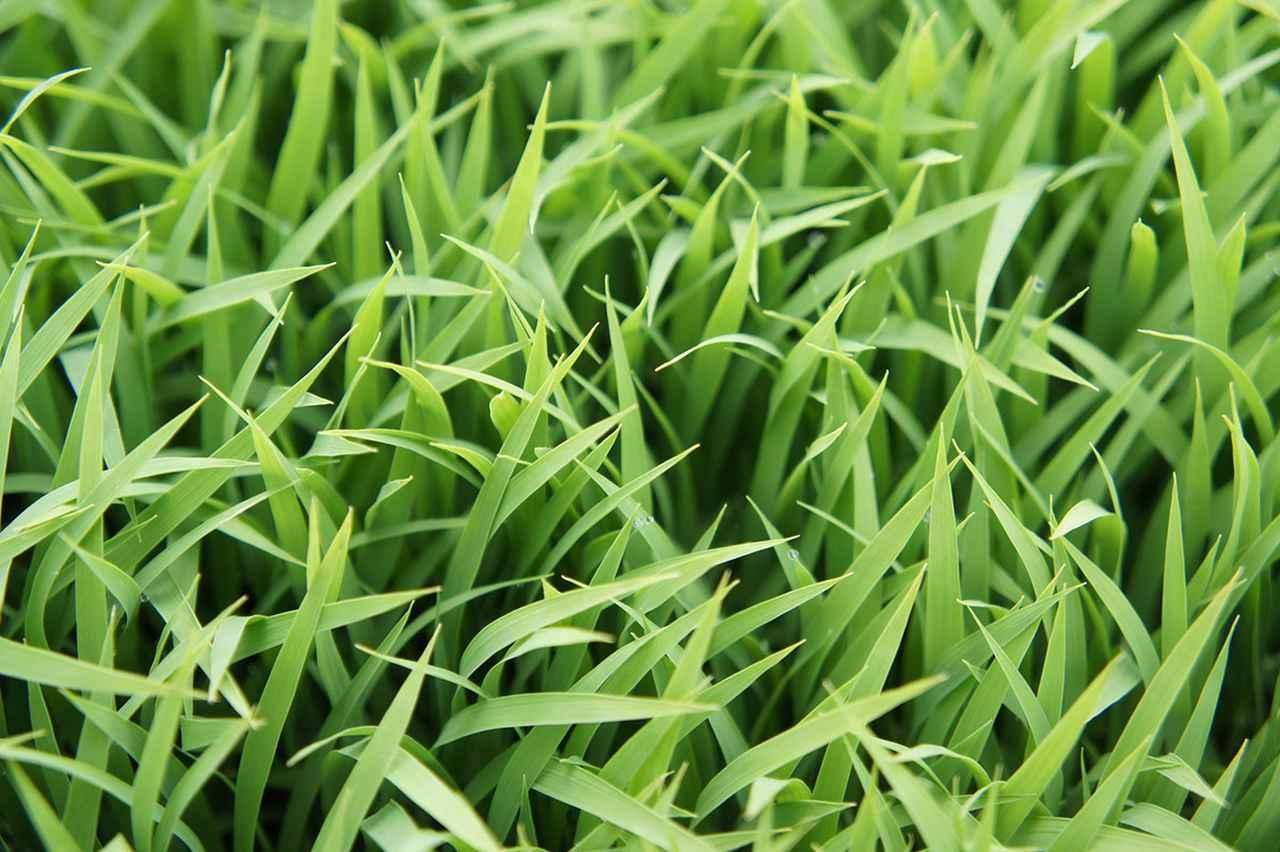 画像: お米農家 やまざき