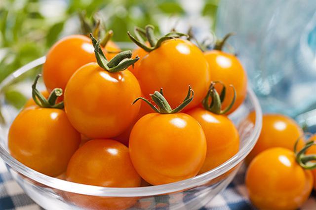 画像: 「オレンジ千果」は、カロテン豊富で甘みも抜群なミニトマトです。家庭菜園で栽培しやすい品種