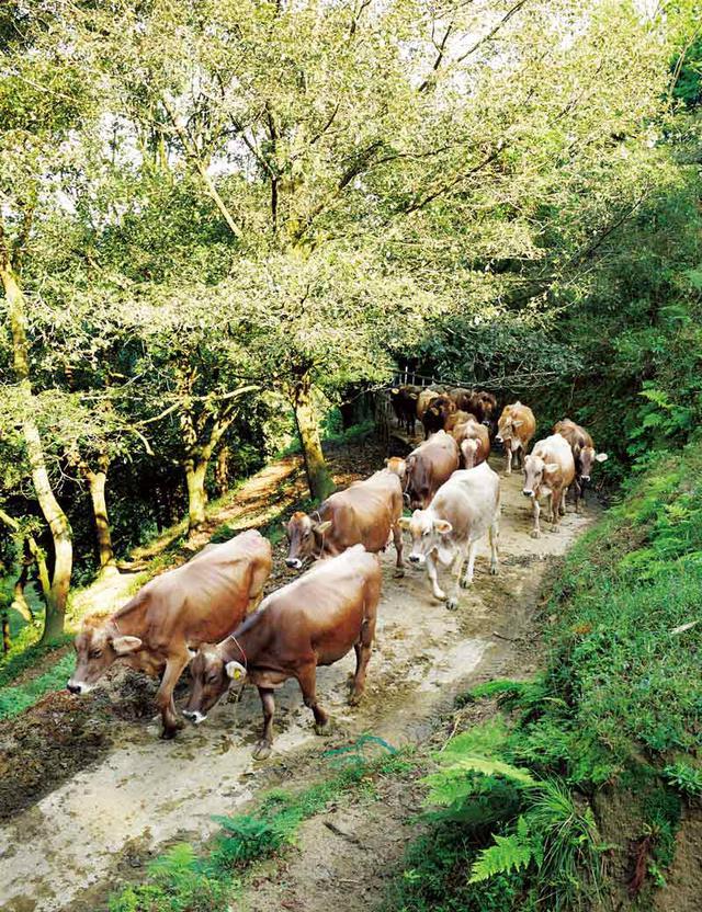 画像: 北欧の酪農思想をモデルにしてつくったという自社牧場の日登牧場。約60頭が毎朝、山地に放牧され、約半日を自由に過ごす