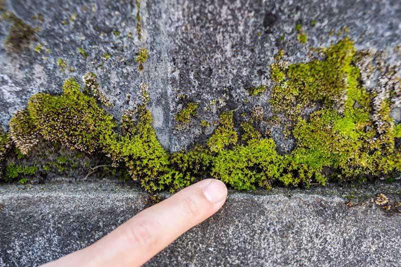画像: ブロック塀の隙間や表面、よく見るといるいる!