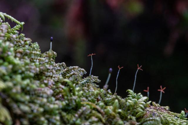 画像: こけには花が咲かず、種をつくりません。胞子を飛ばしたりして増えます