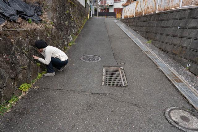 画像: 何の変哲もない道に見えますが、左の石垣も右のコンクリート壁も見どころいっぱい