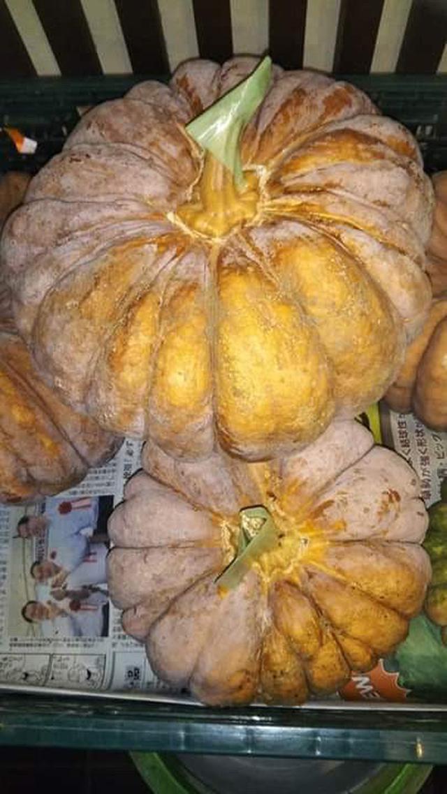 画像: 江戸東京野菜の内藤かぼちゃ。完熟すると、写真のように橙色になり表面に白い粉がふく