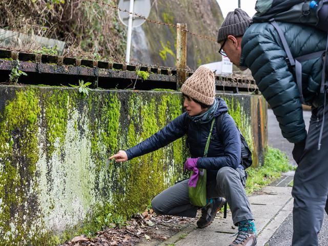画像: 歩きだして間も無く、ハイキングコースの入口に着く前に遭遇した壁。もちろん素通りできません