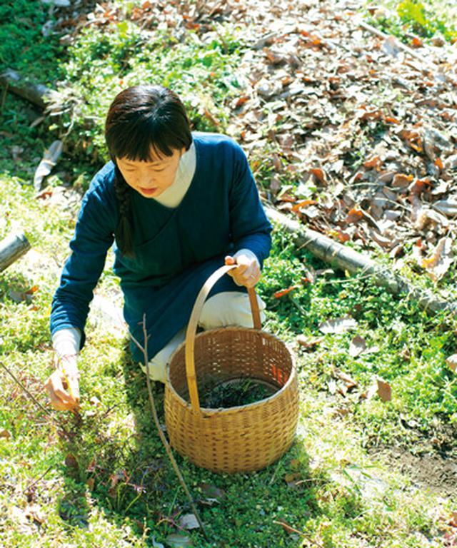 画像: 小さな野草でも、歩いている途中で素早く見つけては、摘んでいく