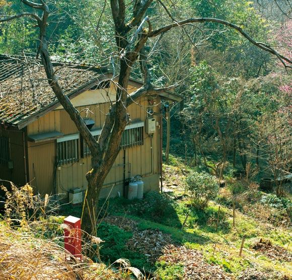 画像: 緑に囲まれた石田さんの家。隣には、野菜やハーブがとれる菜園や小さな茶畑が