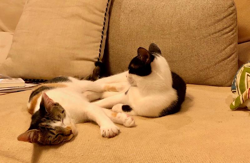 画像: ソファでくつろぐクロとフネ。二匹で毛づくろいをし合う姿もよくみられます
