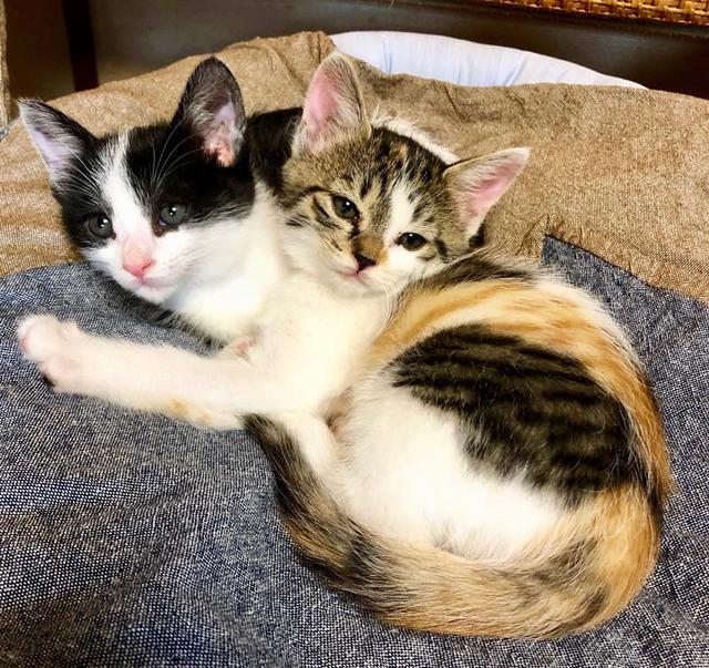 画像2: 村暮らし、まちあるき。 第六回 クロとフネ、2匹の猫が来た一年|玉木美企子