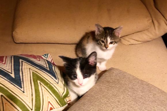 画像: ゲージから出たばかりの頃のクロ(写真左)とフネ(写真右)。名前は次男がつけました