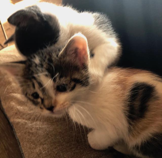 画像1: 村暮らし、まちあるき。 第六回 クロとフネ、2匹の猫が来た一年|玉木美企子