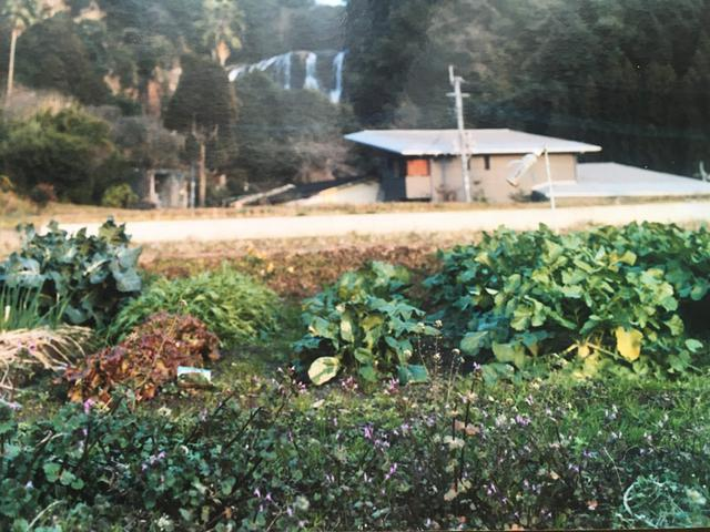 画像2: ナズナの葉の摘み方