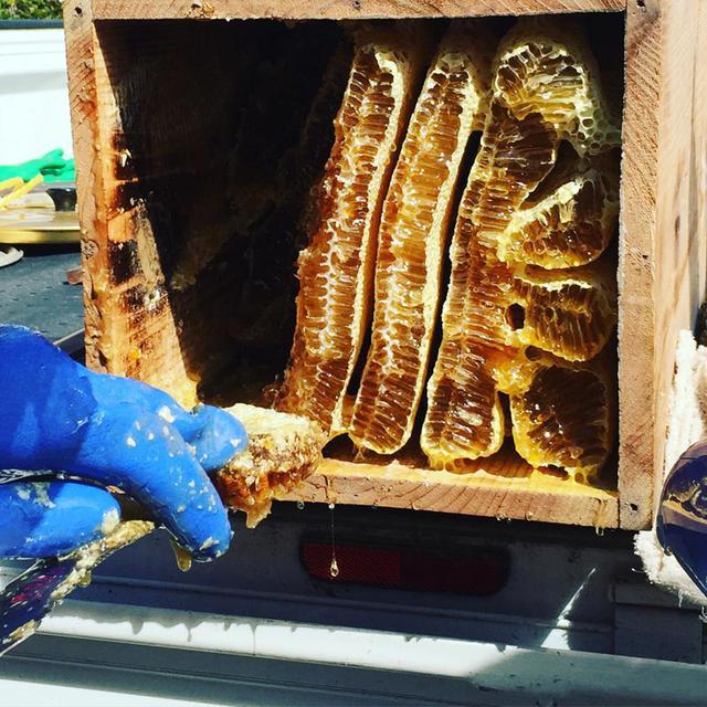 画像: 巣箱を開けると、美しい巣がぎっしり。そのなかに、黄金色のハチミツがたっぷりと詰まっていました