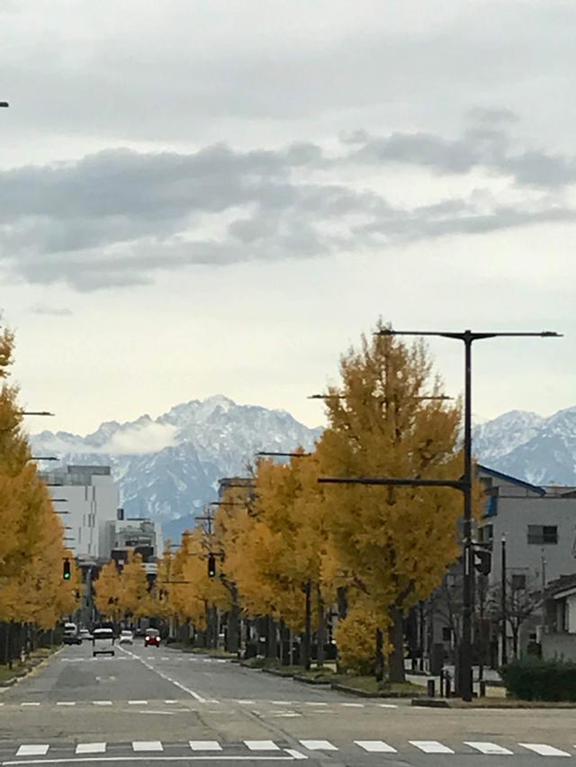 画像: 富山市内の銀杏並木と北アルプス