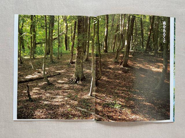 画像: 深い森の中を歩いている気分になります。