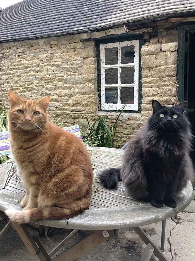 画像: 左の茶とらが甘えん坊の男の子ディエゴ、右のふさふさの黒猫がおっとりだけど社交家のココ