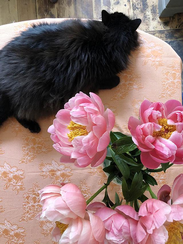 画像: ココは、花を飾るとすぐに花の横に座り、まったり