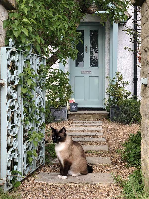 画像: こちらも散歩中に出合ったご近所の猫。自宅(?)の門で行儀よく
