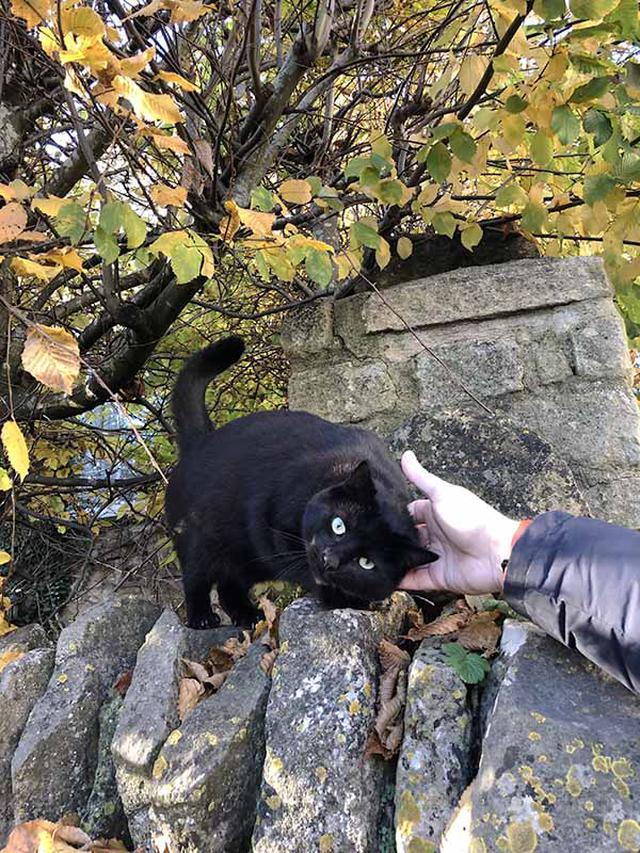 画像: 散歩中に出合ったご近所の猫。夫は引き込まれるようにスキンシップを挑む