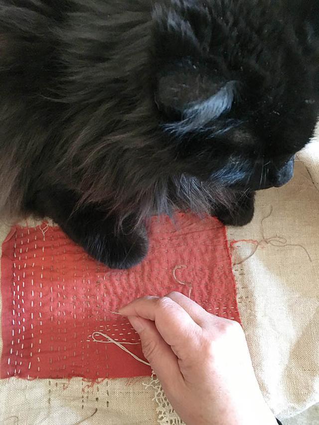 画像: 私の仕事中に布の上でくつろぐココ