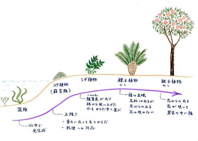 画像: 植物の進化
