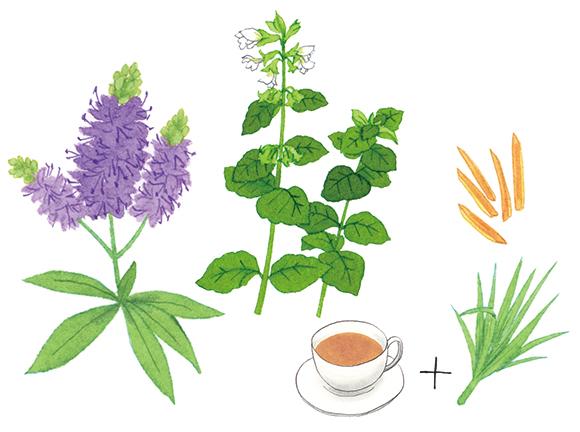 画像: 森田敦子さんに教わる 症状別、ハーブとスパイスの植物療法