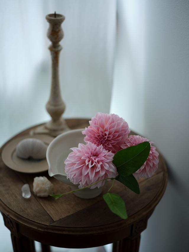 画像2: 片口の鉢には、大輪の花を