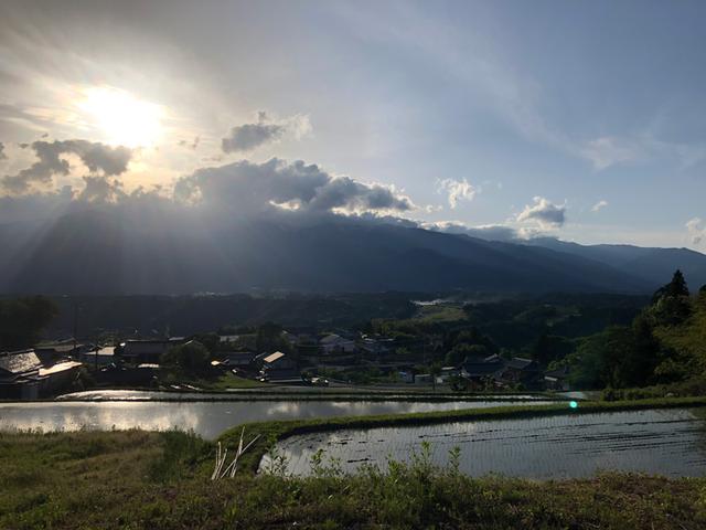 画像2: 村暮らし、まちあるき。 第12回 雨の日には、緑|玉木美企子