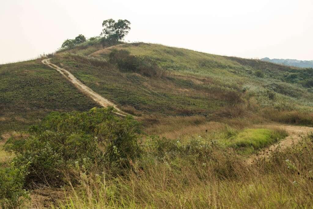 画像: 木架山大草原