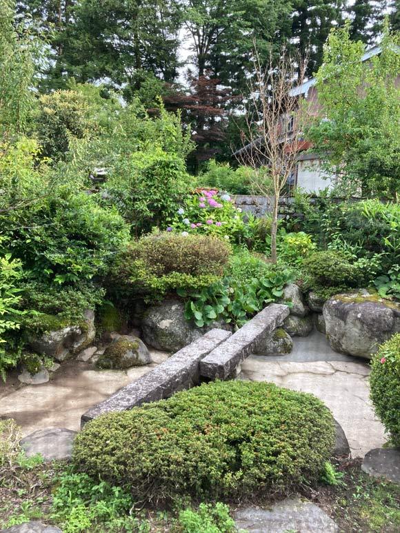 画像: 雨の季節が始まり庭の緑が茂ってきました。