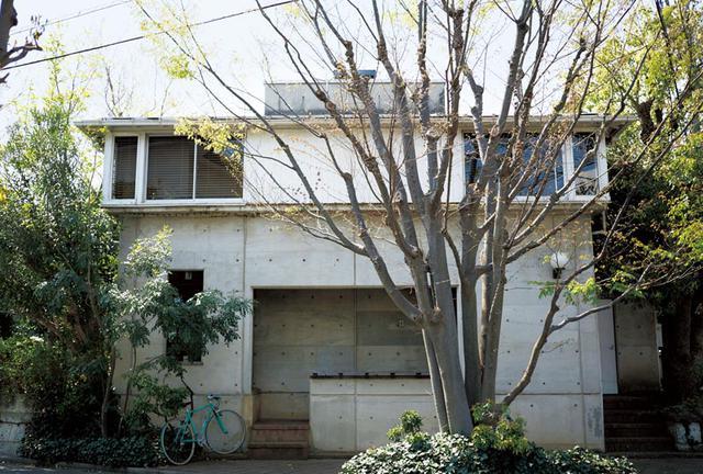 画像: 42年前、この家を建てたときに植えたケヤキの木。時がたち、7本がまるで一本の大木のように寄り添った。「七人の侍」と阿部さんは呼ぶ
