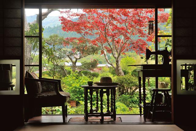 """画像: 美しい楓の木が見事に調和した東側の庭。夏はジャパニーズ・ガーデンのアジサイやワイルドストロベリー、コテージガーデンのアナベルなどの """"白"""" がさわやか"""