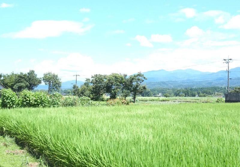 画像: 長い梅雨が明けたら北陸に猛暑が。お米が無事に稔りますように。