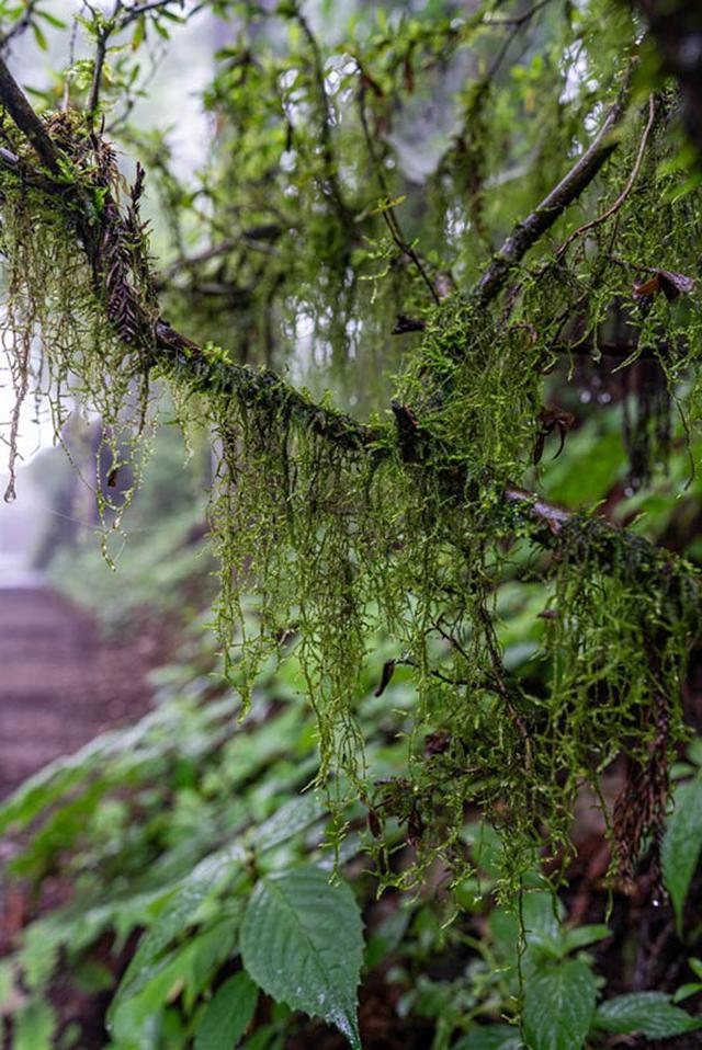 画像: キヨスミイトゴケの名の由来は千葉県の清澄山