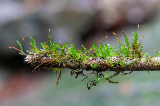 画像: 何もかもにこけが生えています。落ちている小枝にもほら!