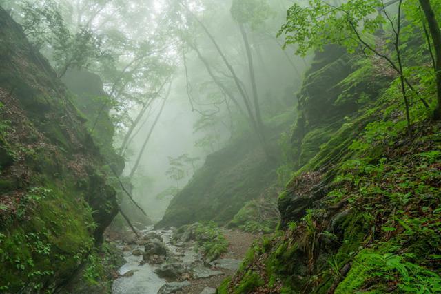 画像: 霧のおかげで、ここは本当に東京かと驚く幽玄な景色に